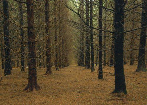 Il tempo delle foreste (2)
